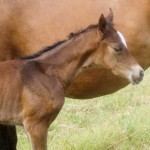 Absolut - Anna filly first-day